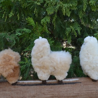 boutique standing alpaca side
